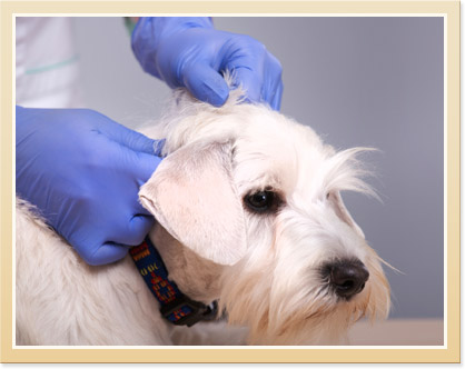 Dermatology for Pets