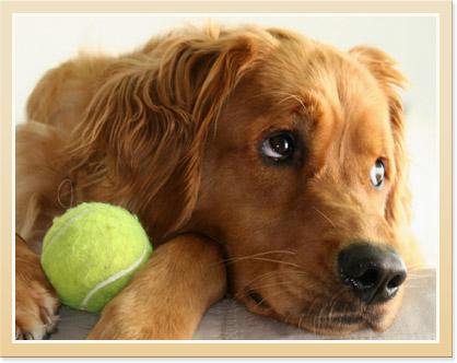 pets preventive care