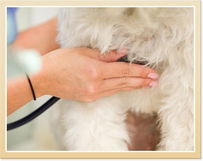 Protecting Pets from Heartworm